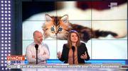 Les chatons vont vous faire craquer au Salon International du chat à Ath !