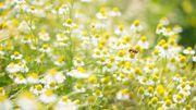 Les abeilles sauvages sont de retour chez nous.