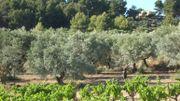 France: Jean Somville, antiquaire brocanteur et viticulteur en agriculture biologique