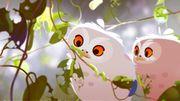 """""""L'odyssée de Choum"""", un dessin animé attendrissant d'une chouette à la recherche de sa famille"""
