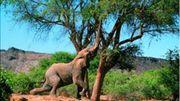 éléphant se nourrissant