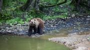 Le Parc animalier Forestia recherche des étudiants pour l'été