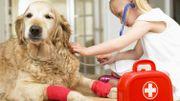 Quels sont les gestes de premiers secours à adopter pour nos chiens et chats?