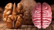 Voici 5 aliments qui ressemblent à des organes et qui les soignent aussi !