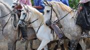 Découvrir l'équitation et un petit coin de Camargue, avec la manade de Collarmont à Carnières