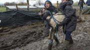 Les soixante animaux évacués étaient concentrés dans un périmètre beaucoup trop exigu