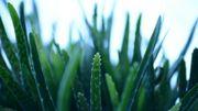 Ces plantes d'intérieur qui purifient l'air...