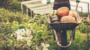 Consommation et production bio: un appétit grandissant