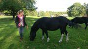 Muriel et ses mules résident au Domaine d'Arthey à Rhisnes, et proposent de l'équitation éthologique et relationnelle