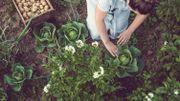 Savez-vous planter les choux ? Ca tombe bien, c'est en août qu'il faut les semer