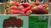 La fraise cultivée en Espagne serait dangereuse pour la santé...