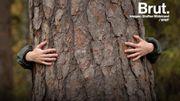 La sylvothérapie : les bénéfices des arbres pour notre santé