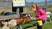 L'école à la ferme ou quand l'éducation passe par l'assiette !