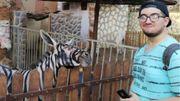 Un âne peint en zèbre dans un zoo du Caire en Egypte