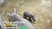 La naissance de ce bébé rhinocéros blanc est une bonne nouvelle pour toute l'espèce