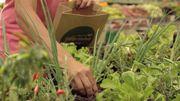 Le Flash tendance de Candice : cueillir vos légumes directement en supermarché