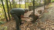 Le sauveur des animaux sauvages - La Belge histoiredans 7 à la Une