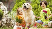Le jardin de tous les dangers pour nos animaux