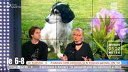 Votre chien aboie trop ? Les causes et les solutions...