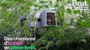 En Norvège, des chambres d'hôpital sont bâties en pleine forêt