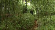 Bamboumania, le jardin de Michel