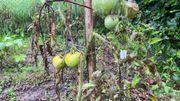 Les fruits et légumes fortement impactés par les mauvaises conditions climatiques