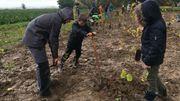 Des charmes, des hêtres, des chênes… une vingtaine d'essences indigènes ont été plantées très serrées
