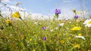 En mai, tonte à l'arrêt !  Beauraing rejoint le mouvement en faveur de la biodiversité