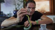 GB: Steve Ludwin, l'homme qui résiste au venin de serpent