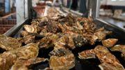 Les nanoplastiques ont un impact sur la reproduction des huîtres creuses