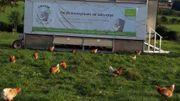 Œufs-Reux, des œufs biologiques de pâturage produit à la Ferme de la Clisore à Andrimont