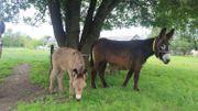 Découvrir le lait d'ânesse et les balades à dos d'âne à Bastogne
