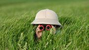 Confinement: l'occasion d'apprendre à observer la nature qui nous entoure!