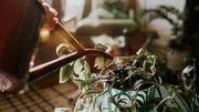 Cinq pots pour arroser vos plantes en votre absence