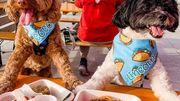 Woofbowl, le food truck uniquement destiné aux chiens