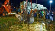 Sauvetage d'un éléphant sauvage tombé dans un puits