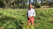 Ferdinand Jolly est un des premiers agriculteurs belges à se lancer dans la culture du bambou