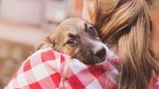 Une seconde chance pour 150 chiens et chats abandonnés