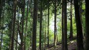 Un bois qui abrite surement des lutins