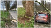 Toitures endommagées, arbres abattus... Région par région, les dégâts causés par la tempête Dennis en Belgique