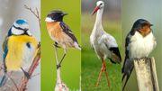Qu'est-ce qui permet aux oiseaux migrateurs de se diriger et corriger leur trajectoire?