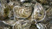Coquilles d'huîtres : tous les usages des cette bioressource redécouverte