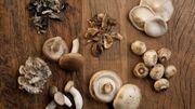 Des champignons poussent dans les caves de Cureghem