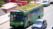 Des plantes sur les toits des bus !