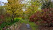 Allée d'érables à Arboretum de Kalmthout