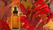 Les 5 huiles essentielles indispensables pour l'automne