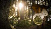 Il faut sauver la forêt des violons de la Val Di Fiemme en Italie