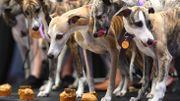 Le concours canin de New York, aussi une affaire de professionnels