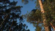 3 activités en extérieur à faire en famille à l'Ecopark Adventures de Tournai
