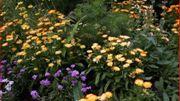 Le parterre d'annuelles au jardin studio de jardins et loisirs change chaque année.